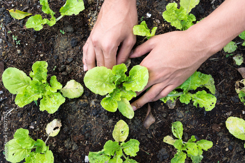 Tuinposter Planten Planting vegetable garden