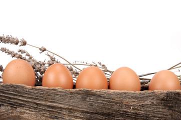 Bebedero de gallinas con huevos.