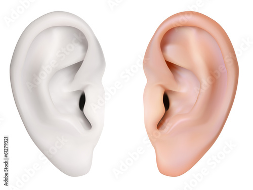 Photo-realistic vector. Human Ear. Isolated on white