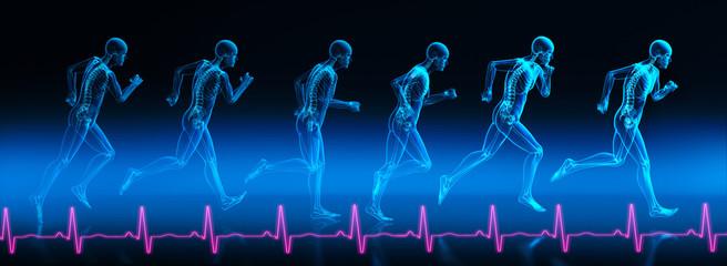 Bewegungsphasen eines Läufers 2