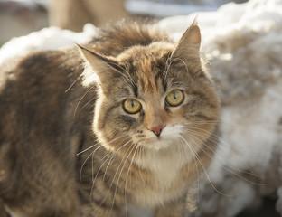 кошка/cat