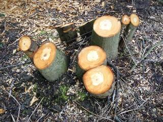 Bäume abgesägt