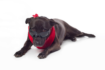 Black Mixed-Breed Dog Peering Over Sunglasses