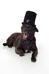 Smiling Black Mixed-Breed Dog in Top Hat & Bowtie