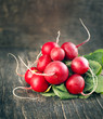 Bunch of fresh radish. Toned image
