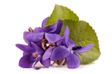 Viola Flowers ( Viola Reichenbachiana )