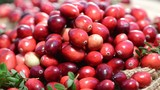 Rotating Cranberries (loopable)