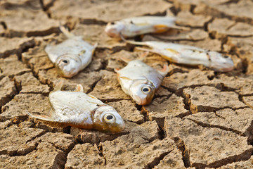 fish die on cracked earth / drought / river dried up