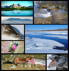A collage on the theme of the Northern nature