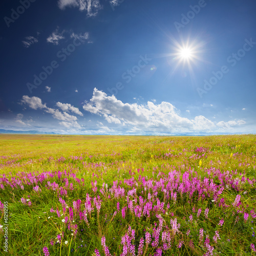 Green field with pink wildflowers and blue sky with white clouds