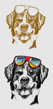 Fototapety Cool Dog Illustration