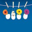 Küken und Blumen in Eiern an Wäscheleine