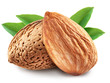 Almonds with leaves isolated. - 61296107