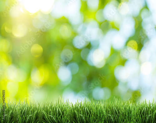 canvas print picture Blurred nature background.