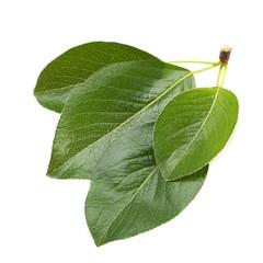 Cherry leaf