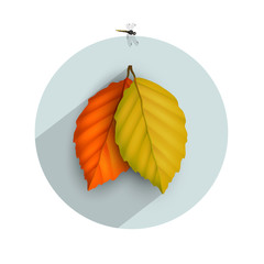 Autumnal leaf icon with long shadow