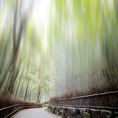 Bamboo forest with a road for adv or others purpose use