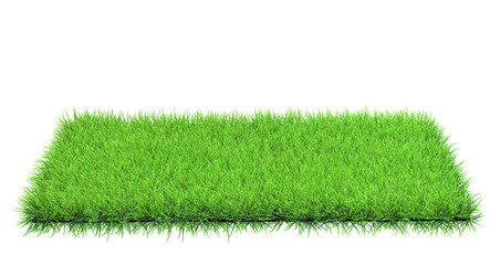 grass in field isolated
