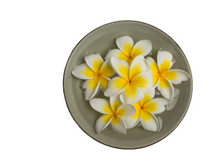 Plumeria  in dishes
