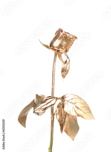 The photo of beautiful golden rose.