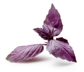 Fresh violet basil isolated on white.