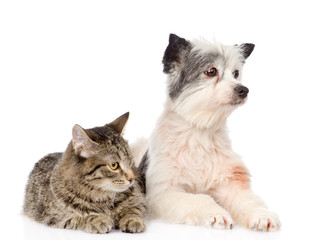 cat and dog lie nearby. isolated on white background