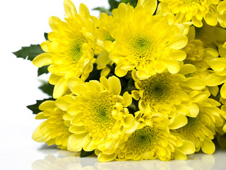 Beautiful chrysanthemum flowers