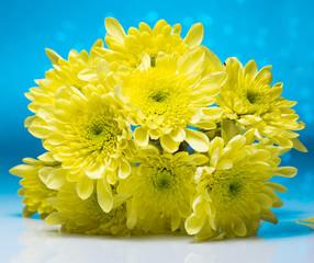 Flowers over blue bokeh background
