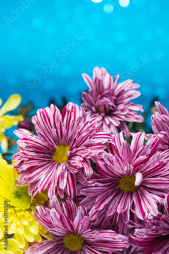 Flowers over blue bokeh background