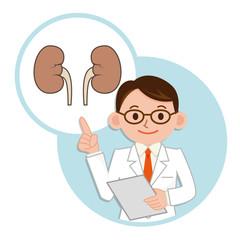 腎臓の説明をする医師