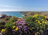 South west coast path near Bedruthan Cornwall Uk