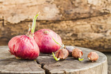 Still life onions on wooden background