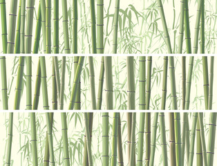 Set of horizontal banner with many bamboos.