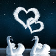 Swans on the lake in the night sky.