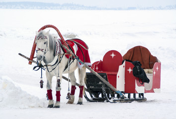 The horse harnessed to a sledge in winter