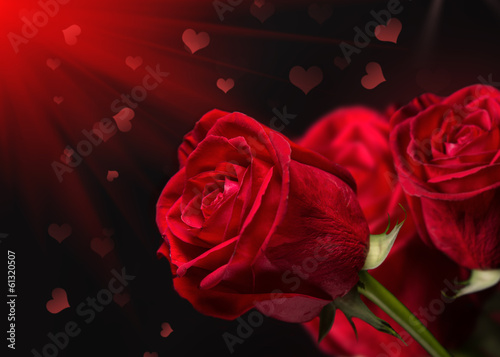 Red roses on a dark background.
