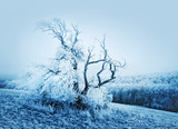 Winter tree nature poster
