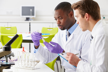 Two Technicians Working In Laboratory
