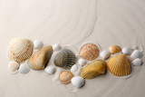 Sea shells on sand.