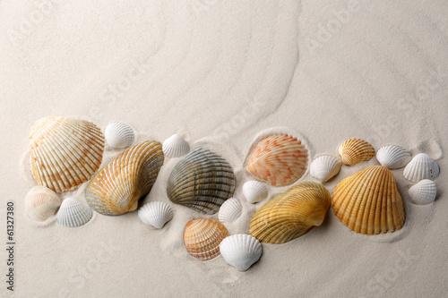 Sea shells on sand. - 61327380