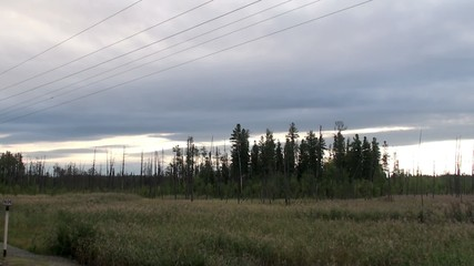 Train departure. View of the taiga from the window.