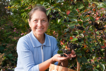 gardener woman picking ashberry