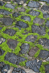 cobblestone pavement with green grass in between