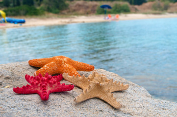 Starfish family