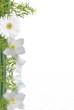 bambou et fleurs blanches