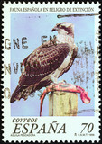 Osprey, Pandion haliaetus (Spain 1999)