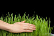 Hand above green grass