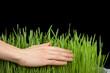 Hand above green grass