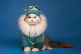 cat clothes on a blue background