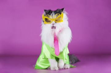 trendy cat glasses on pink background